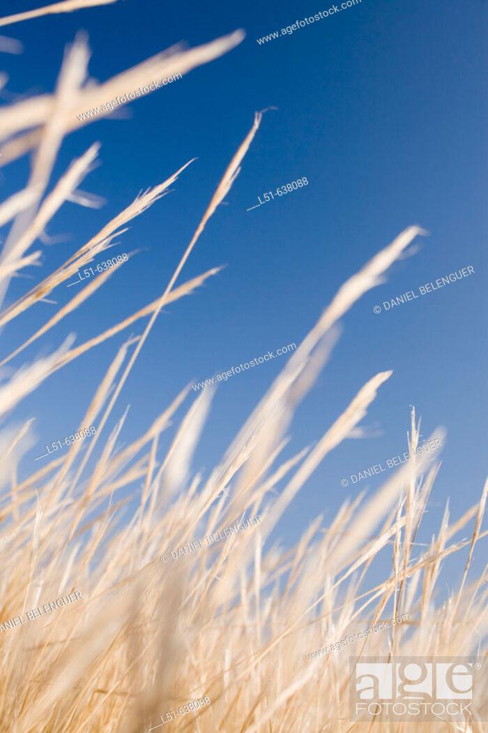 Stock Photo: Graminous. Tabarca island, Alicante province. Spain.