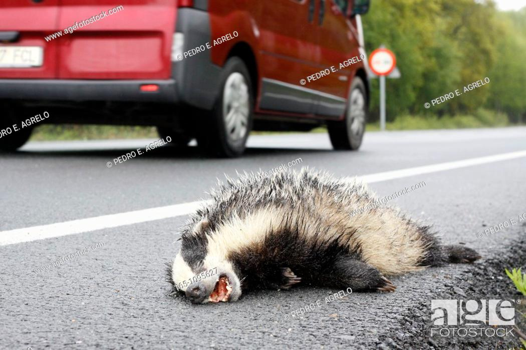 Imagen: Dead animal on the road.