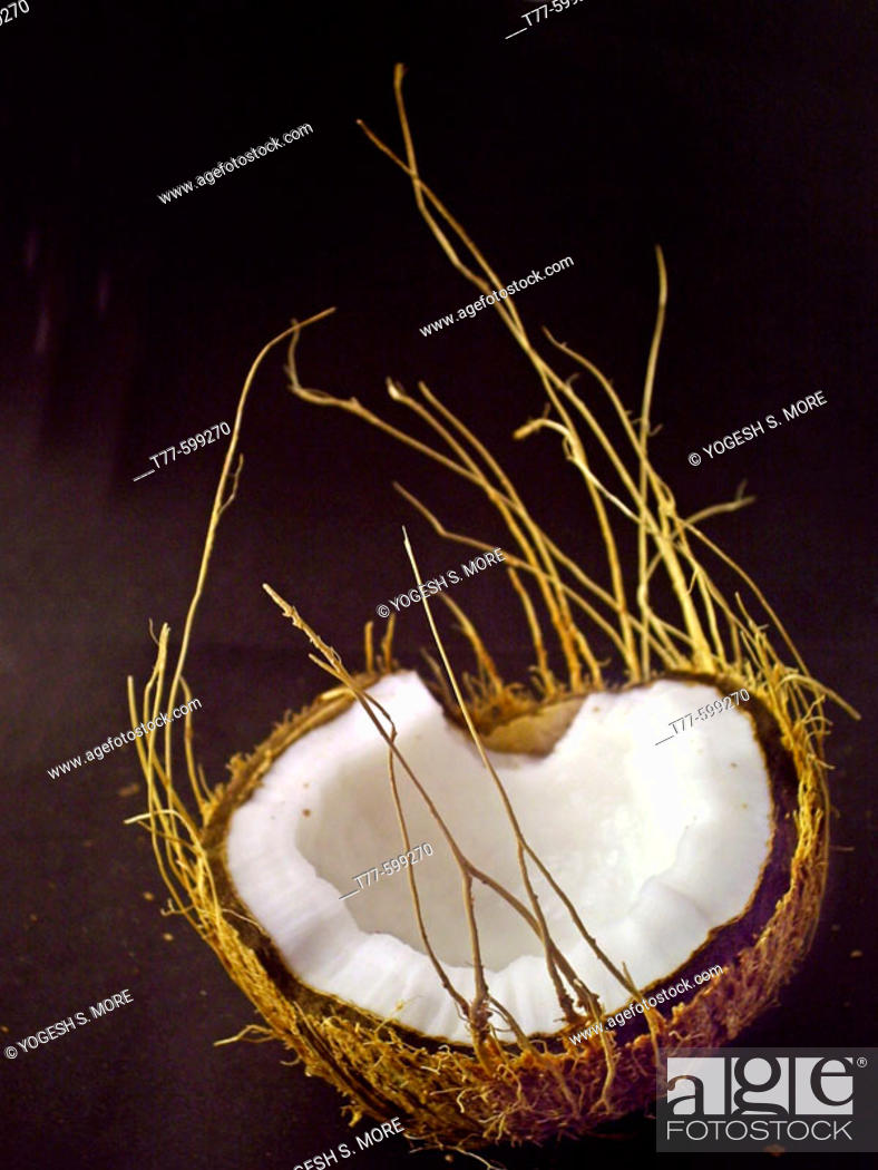 Stock Photo: Coconut. Cocos nucifera, used in cooking and for oil. Pune, Maharashtra, India.