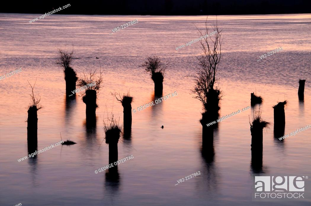 Pilings in Columbia River from Cathlamet Waterfront Trail