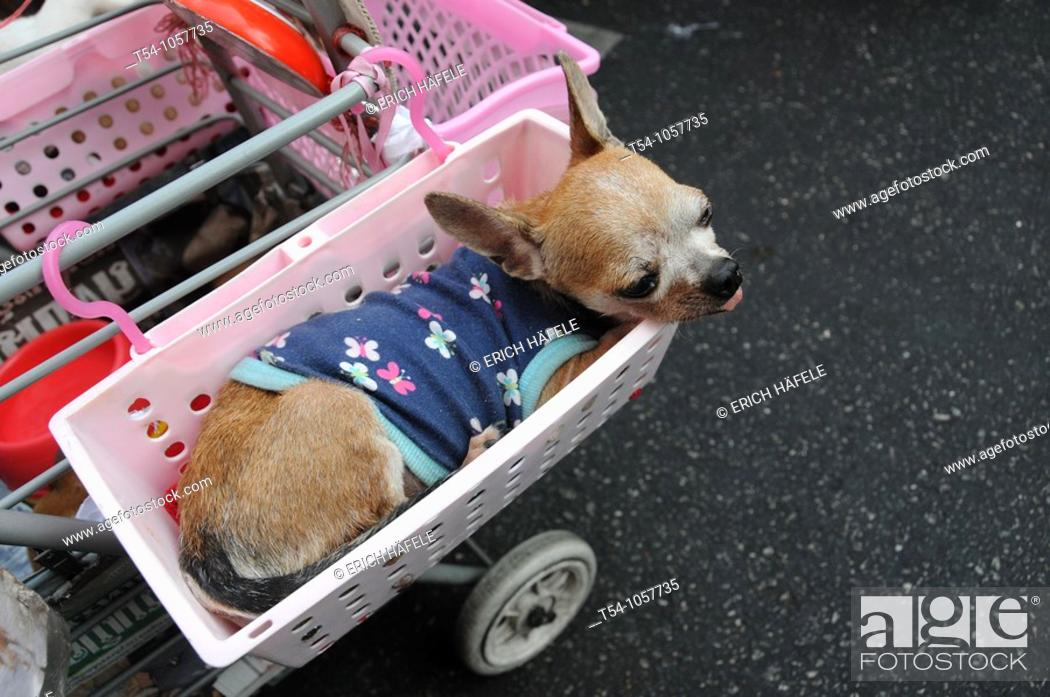 Stock Photo: Smal Dog with Dress in a Basket.