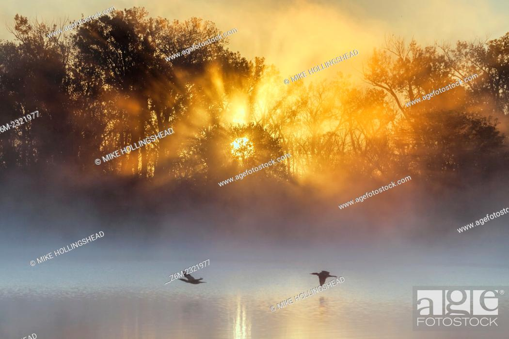 Stock Photo: Rising sun over western Iowa casts rays of light through trees at Desoto Bend NWR.