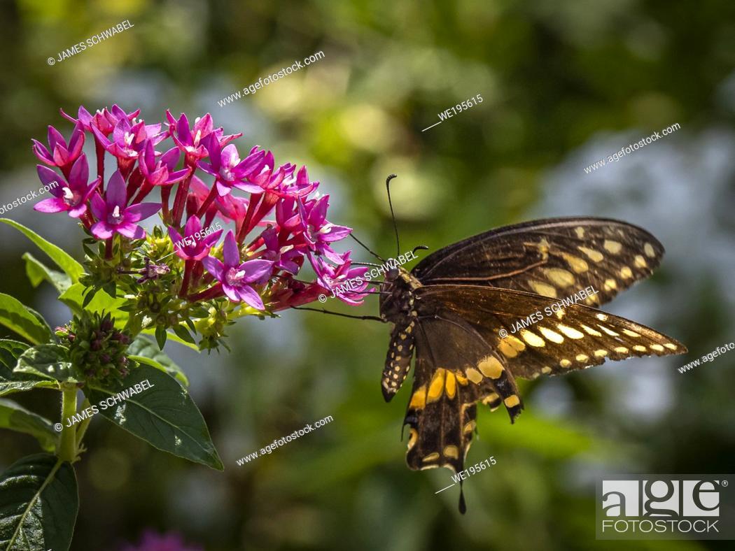 Imagen: Butterfly on red flower in garden, .