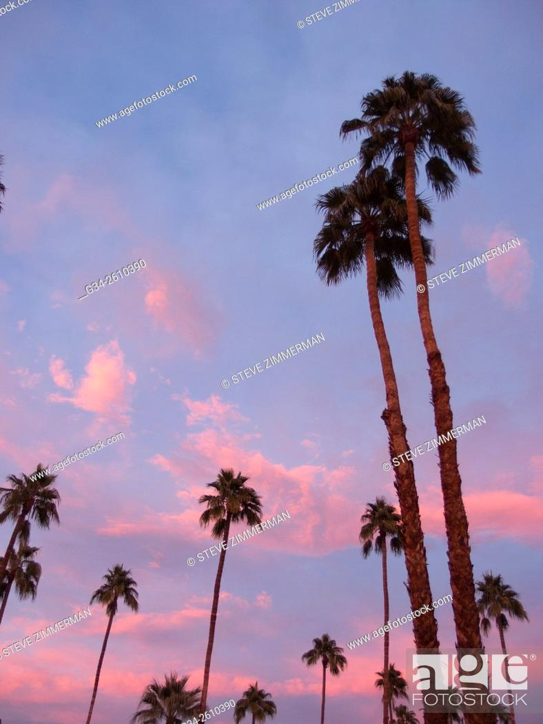 Stock Photo: Pink Palm Springs.