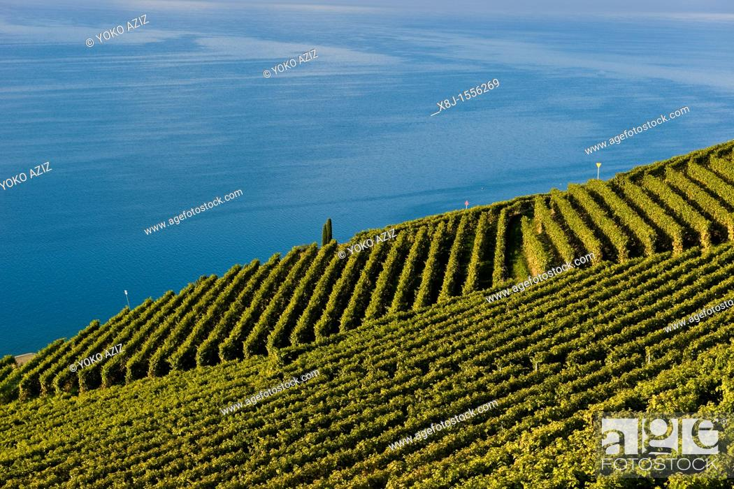 Stock Photo: Lavaux vineyards, UNESCO, Switzerland.