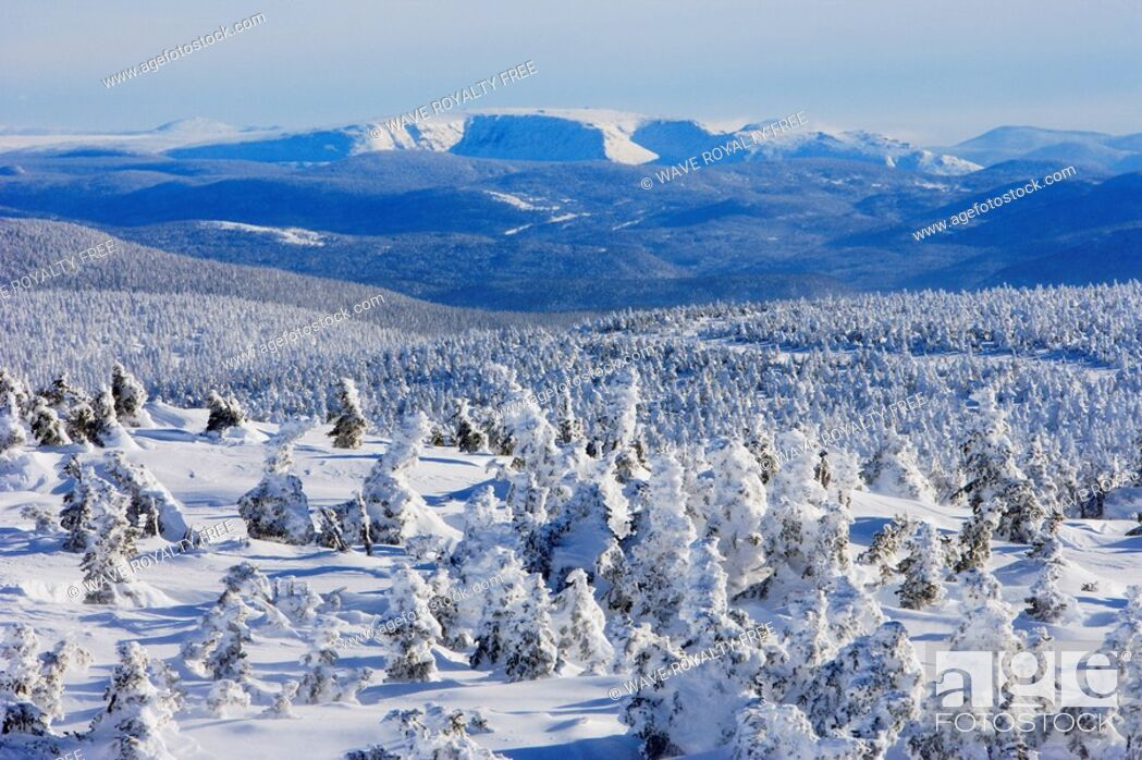 Stock Photo: View of snow-covered trees and Mont Albert from Mont Logan, Quebec, Canada.