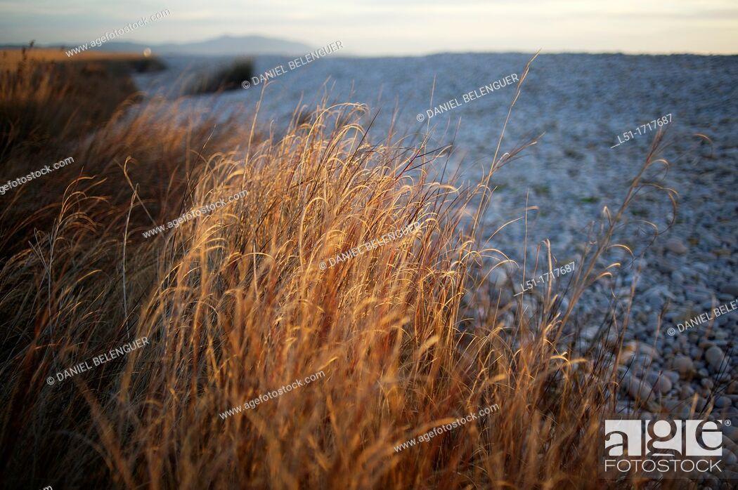 Stock Photo: pebble beach, Prat de Cabanes-Torreblanca nature reserve, Castellon, Spain.