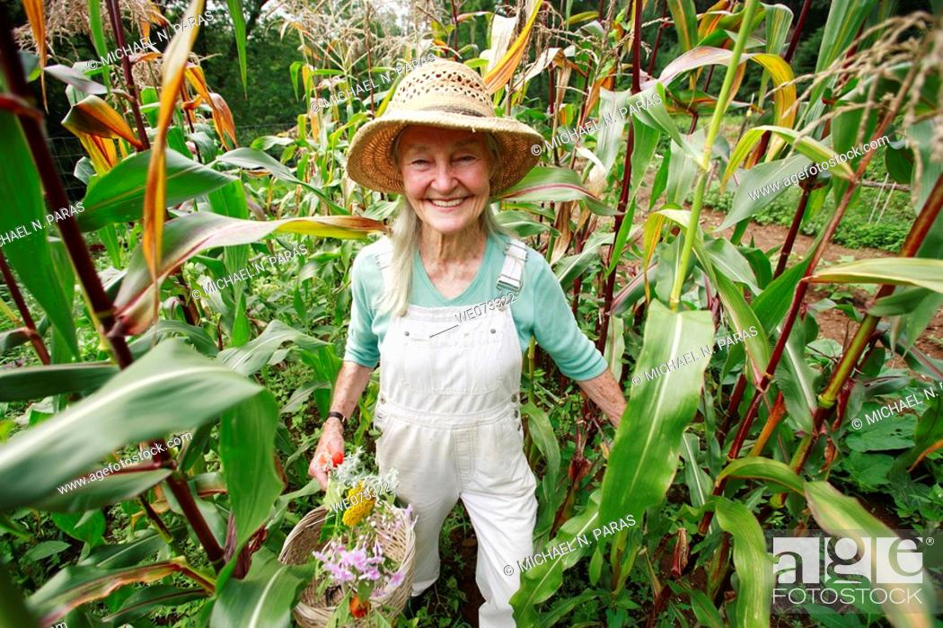 Stock Photo: Senior woman with straw hat looking into camera standing in her corn field.