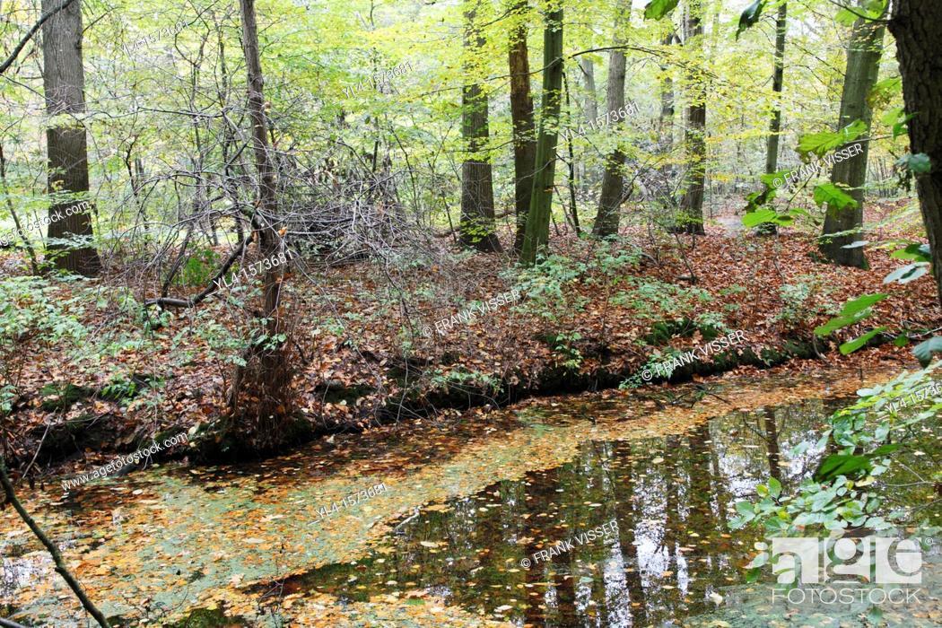 Stock Photo: Autumn colors on Estate Spanderwoud, Hilversum, Goois Natuurreservaat, The Netherlands.