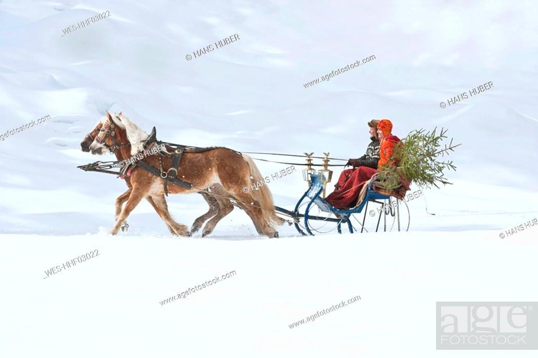 Stock Photo: Austria, Salzburger Land, Couple transporting Christmas tree on sleigh, smiling, side view.
