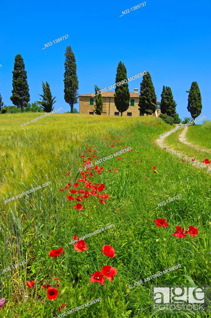 Stock Photo: Val d'Orcia, Orcia Valley, Farm with cypress trees, Fields and Farmhouses, Tuscany Landscape, UNESCO world heritage site, Pienza, Siena Province, Tuscany, Italy.