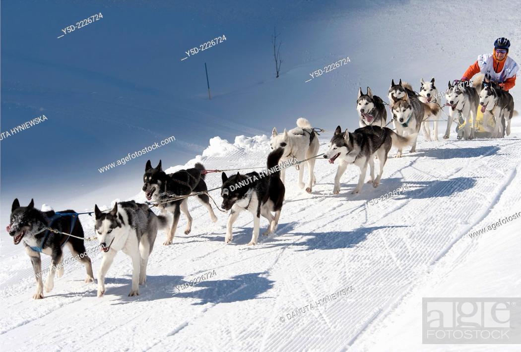 Dog sledge race in Gadmen, Switzerland, Stock Photo, Picture