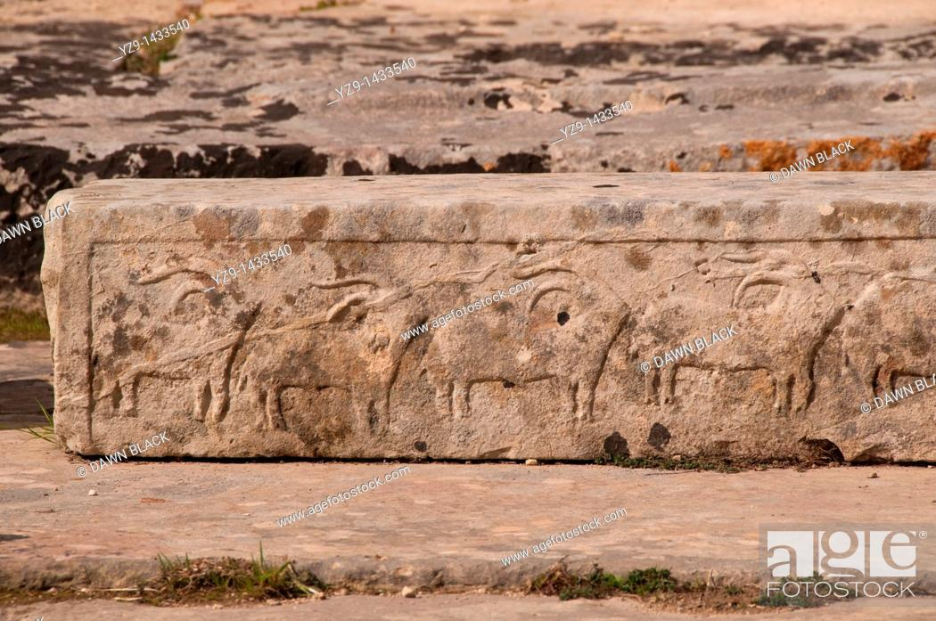 Stock Photo: Neolithic Bull carvings on a stone in Tarxien Temple, Malta.