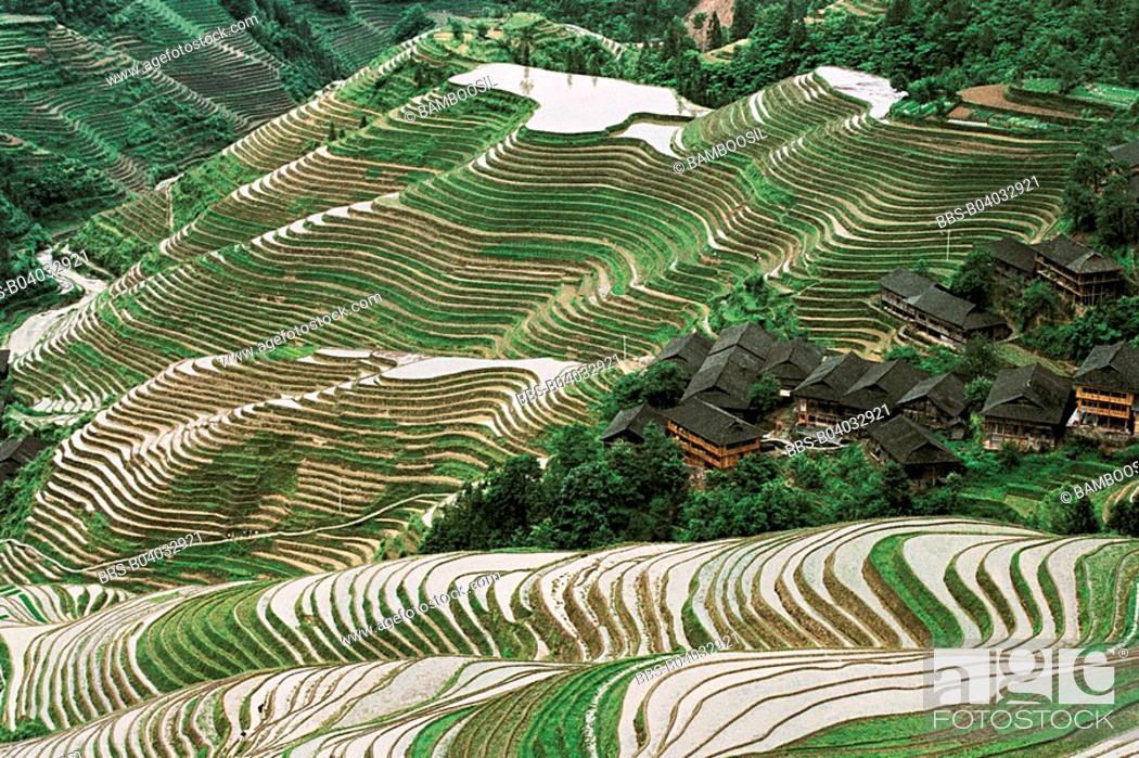 Imagen: Longji Terraces in the Yao minority village, Longsheng County, Guilin City, Guangxi Zhuang Nationality Autonomous Region of People's Republic of China.