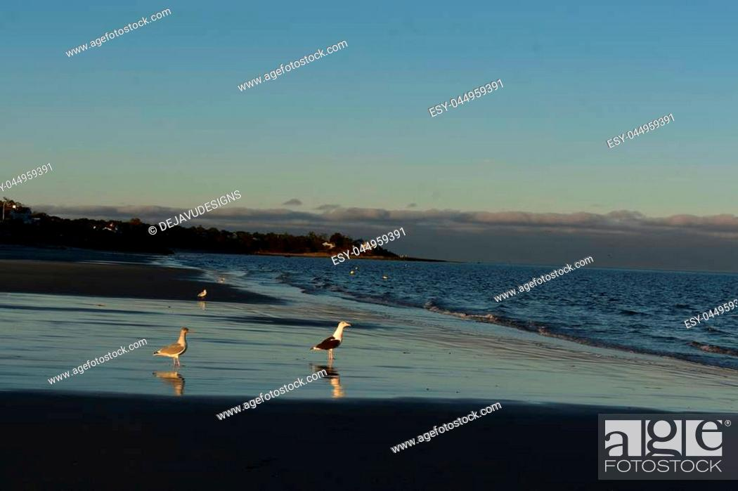Stock Photo: Low tide off the coast of cape cod with seagulls.