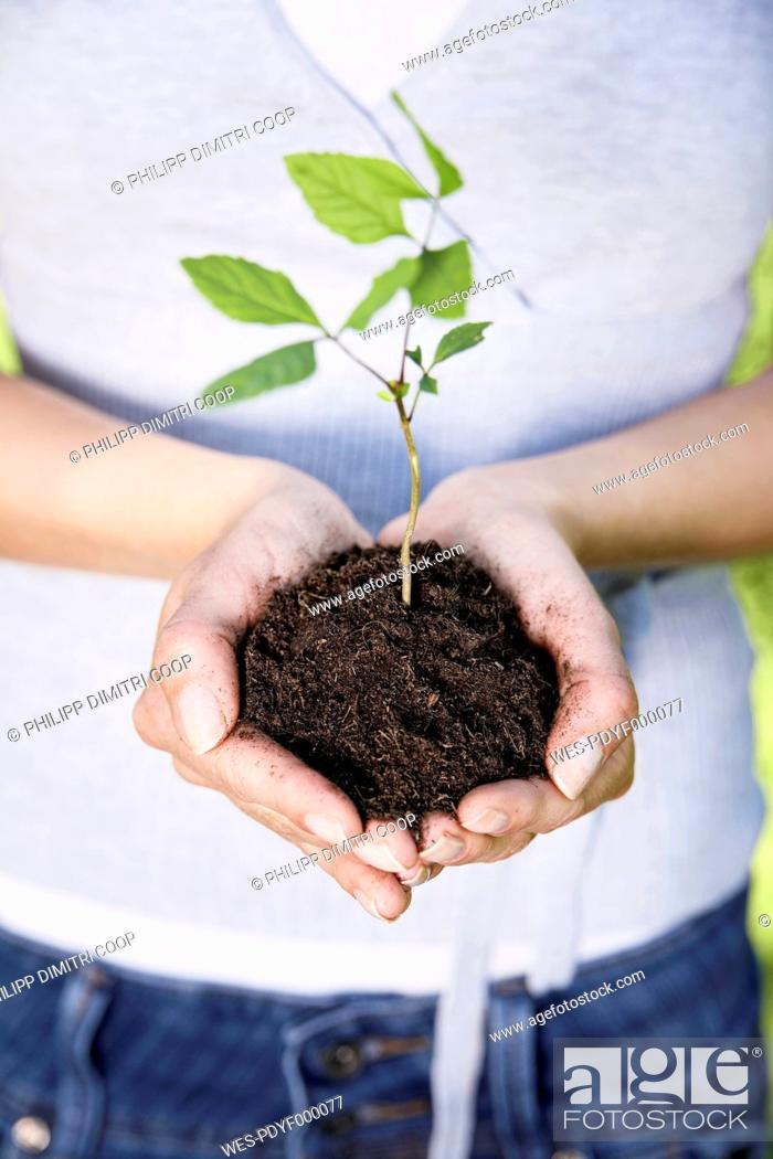 Stock Photo: Germany, Cologne, Young woman holding seedling, close up.