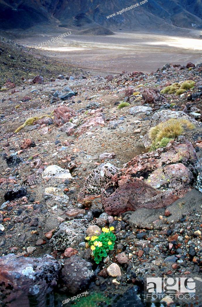 Stock Photo: Tongariro Crossing (trail / volcanoes) Tongariro National Park, North Island, New Zealand.