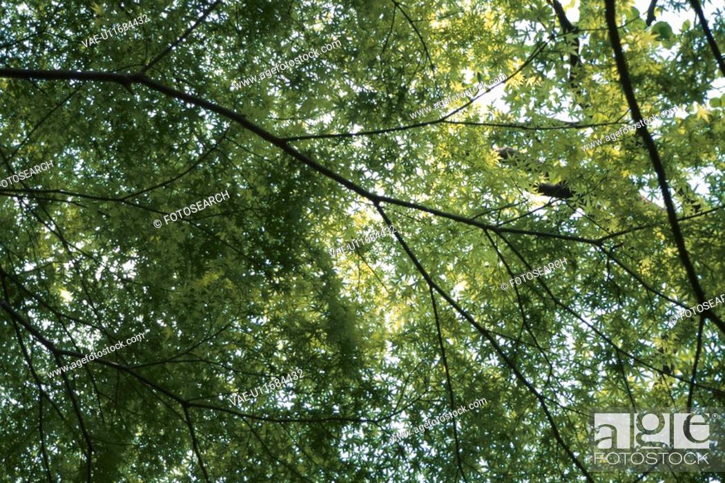 Stock Photo: Branches And Leaves.