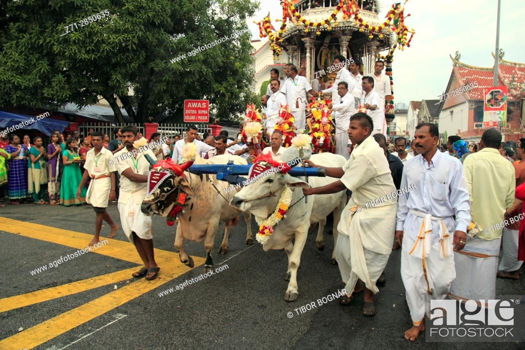Stock Photo: Malaysia, Penang, Thaipusam, hindu festival, oxen pulling the silver chariot, .