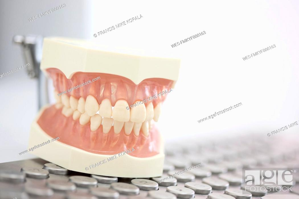 Stock Photo: Germany, Exhibition dentures on keyboard in dental office.