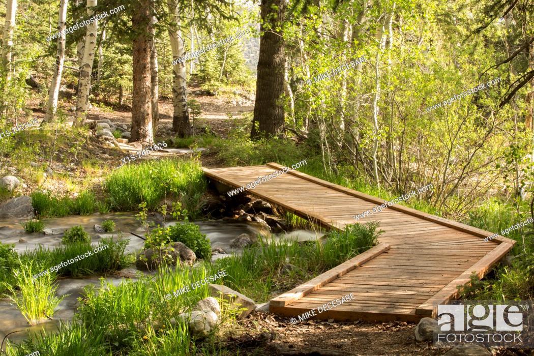 Stock Photo: A wood plank walking bridge spans a creek in a forest in Utah.