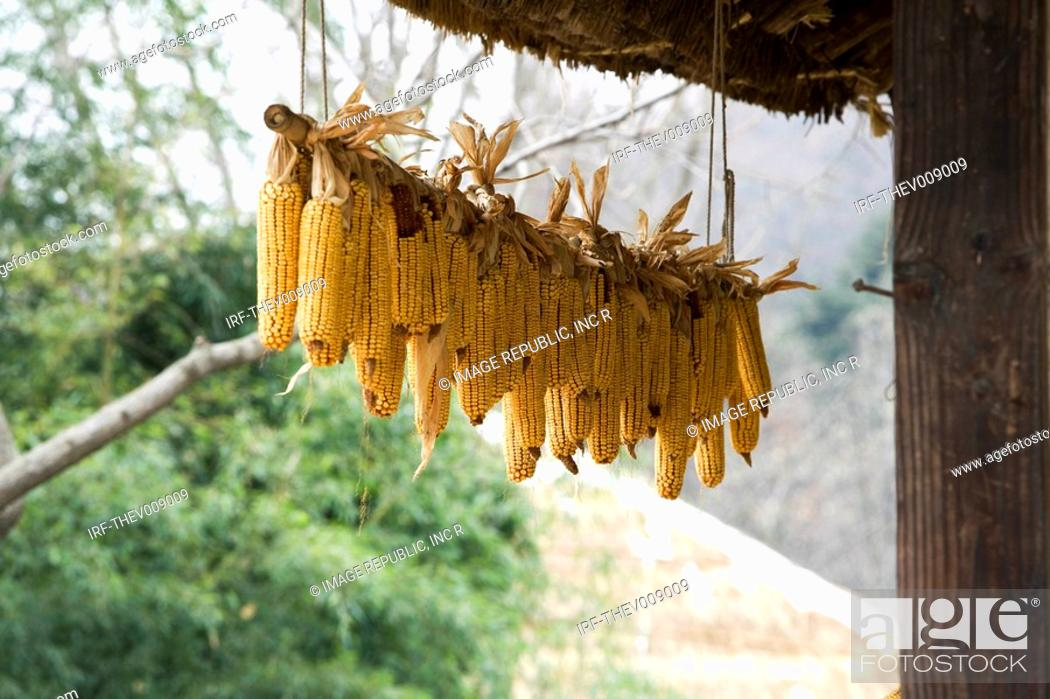 Stock Photo: Korean traditional architecture, corns hung under the eaves.
