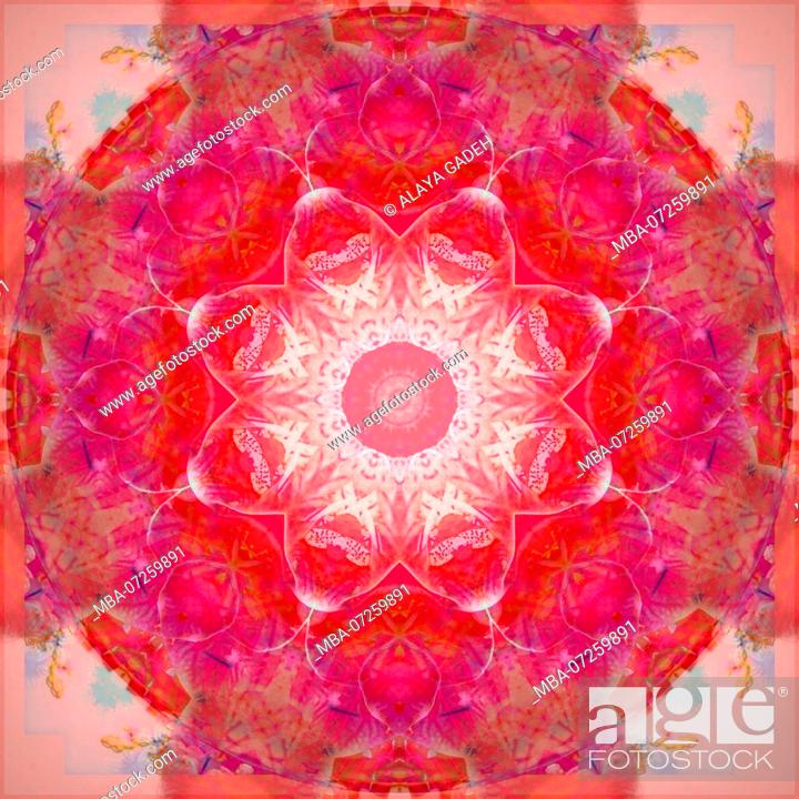 Stock Photo: Photographic flower mandala, red,.