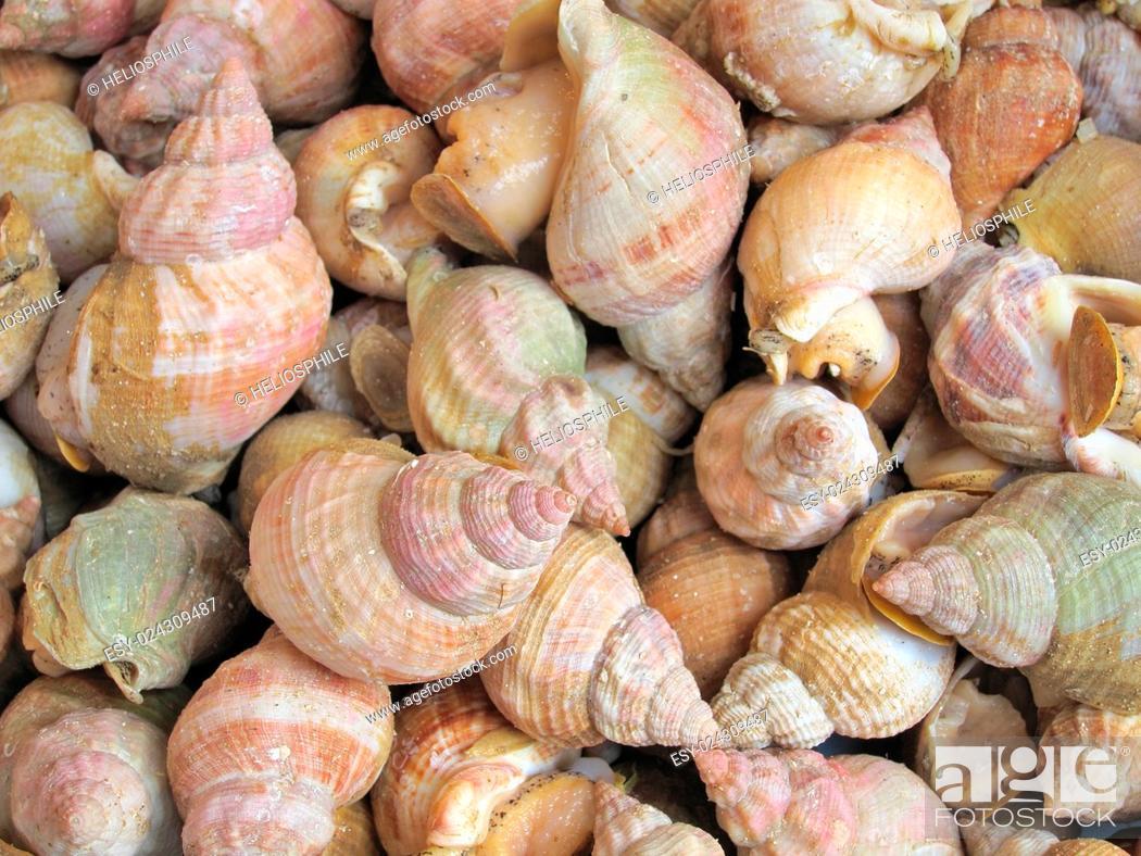 Photo de stock: Fresh whelks on sale in market.