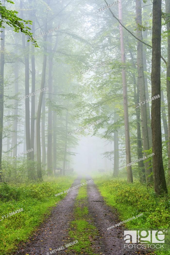 Stock Photo: Path through misty beech forest, Nature Park, Spessart, Bavaria, Germany, Europe.
