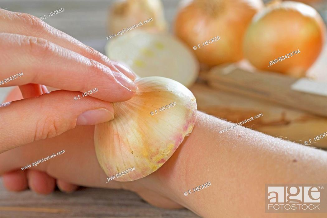 Garden onion, Bulb Onion, Common Onion (Allium cepa), using