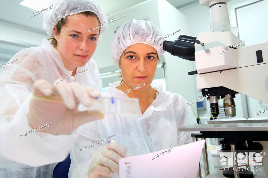 Stock Photo: Knowing the viability of mammalian cells though Trypan blue vital stain, Researchers working in the cell culture room , Fluorescence microscope.