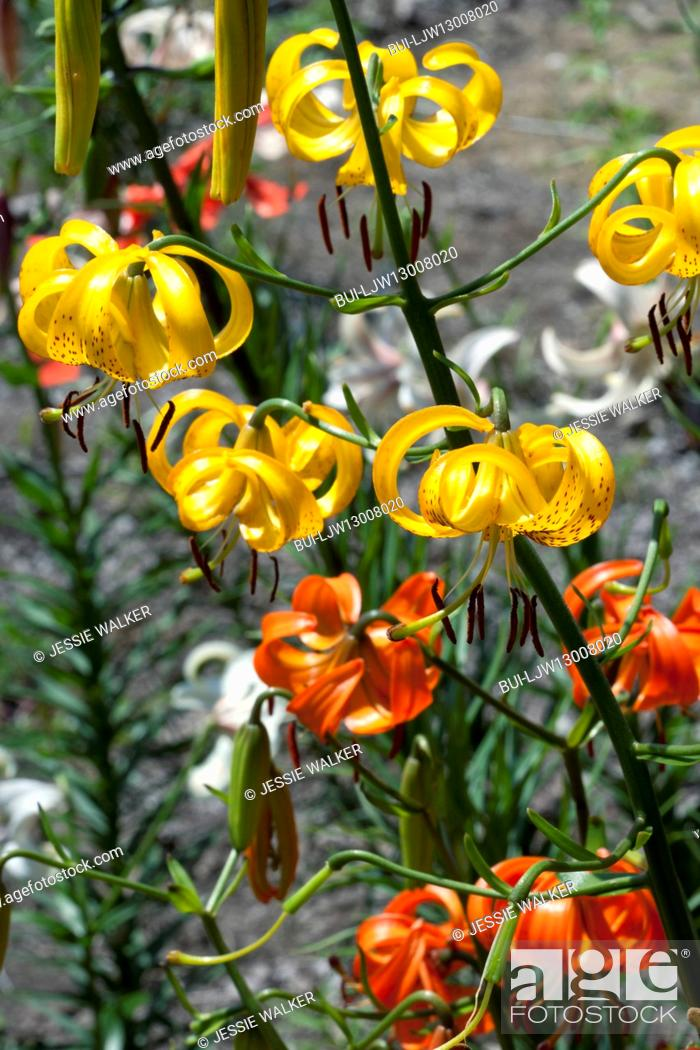 Stock Photo: Close-up of yellow and orange flowers.