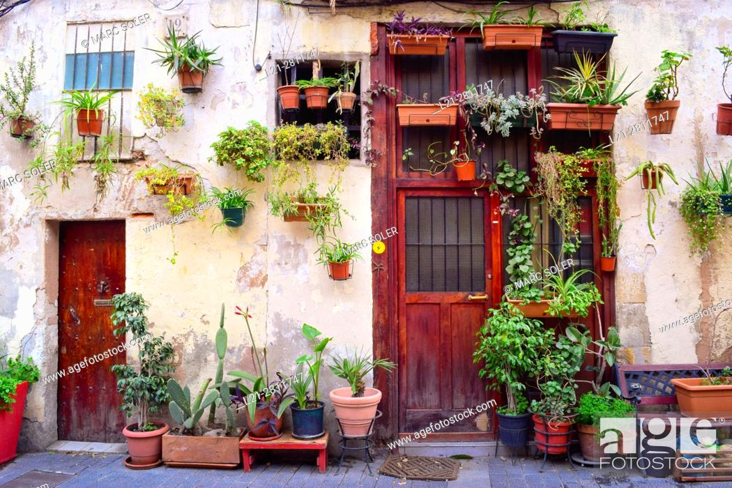 Stock Photo: Potted plants in a facade of a house, outdoor, street. Barcelona, Catalonia, Spain.