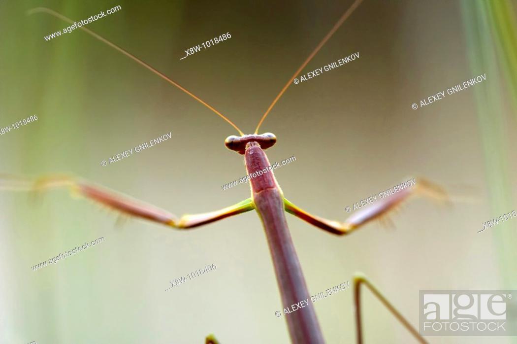 Stock Photo: Insect macro, Laos.