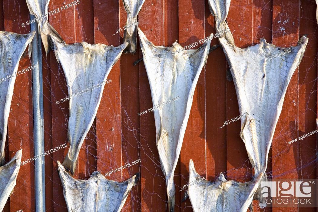 Photo de stock: Drying cod. Norland. Vegaøyan (Vega Islands). UNESCO World Heritage. Norway.
