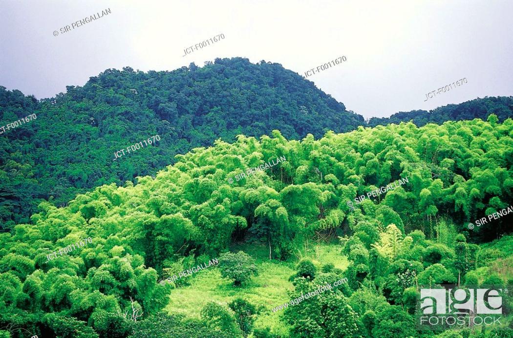 Stock Photo: Jamaica, Montego Bay, Cockpit area, country landscape.