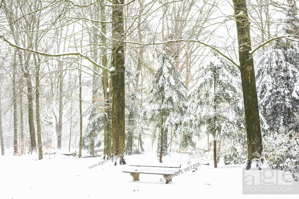 Stock Photo: WBench in a winter landscape with snow, Philips de Jongh Park, Eindhoven, The Netherlands, Europe.