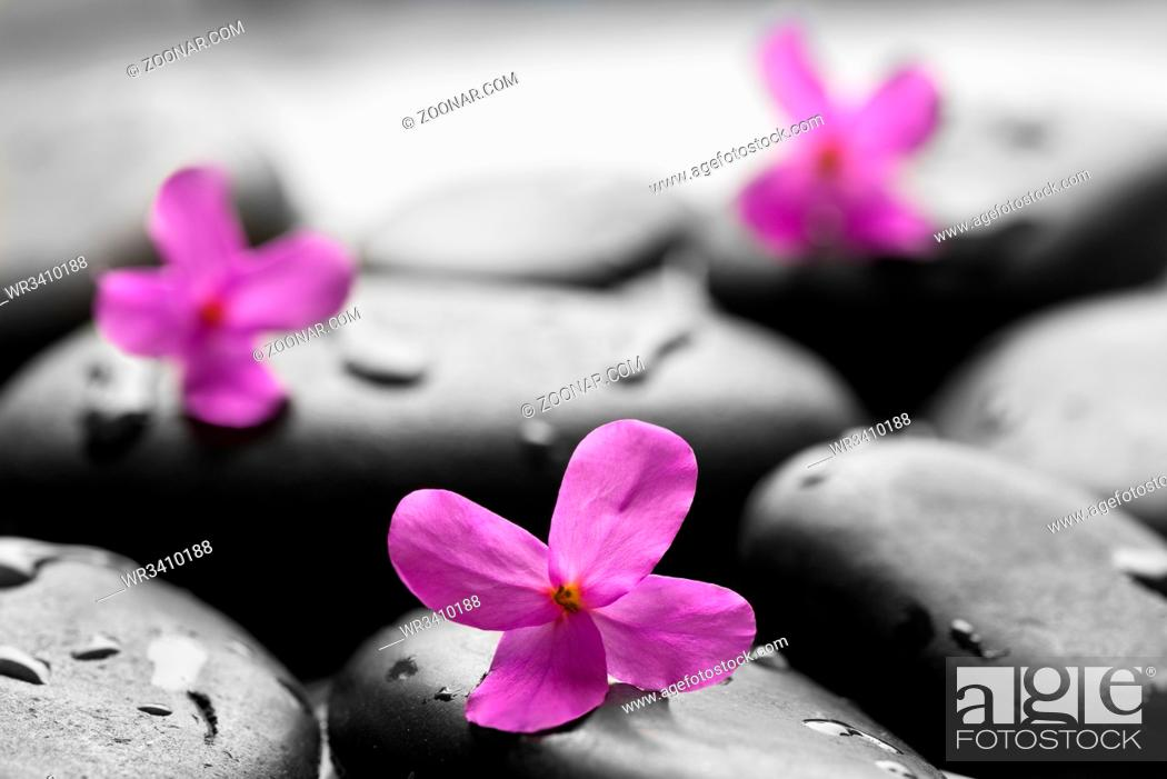 Stock Photo: Black wet pebbles with flowers background.