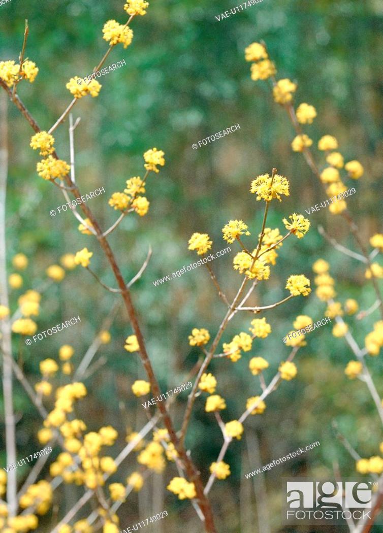 Stock Photo: flowers, nature, plants, flower, plant, film.