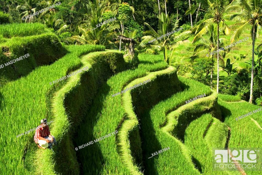 Stock Photo: Rice terraces near Tegallalang village, Bali, Indonesia.