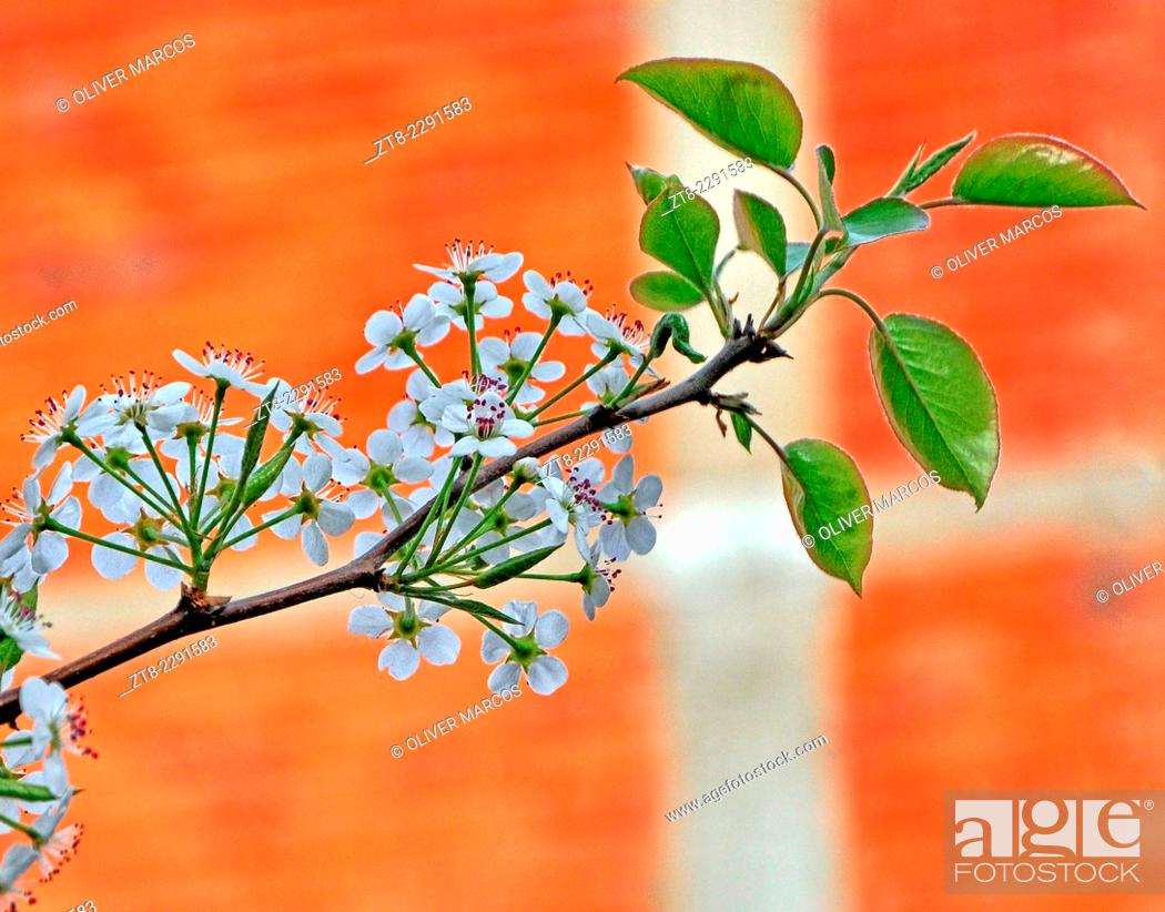 Imagen: Photograph of a branch of an apple tree in bloom, blurring the background with a larger diaphragm aperture than usual, in this case f / 5.7.