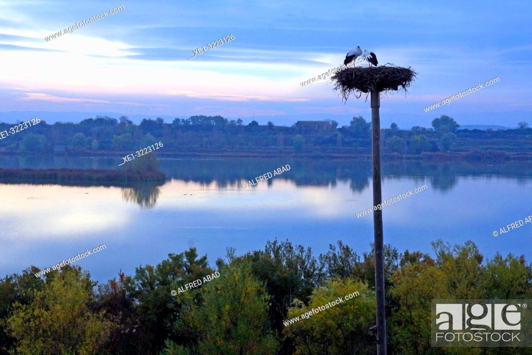 Imagen: Storks, Estany d'Ivars i Vila-Sana, Lleida, Catalonia, Spain.