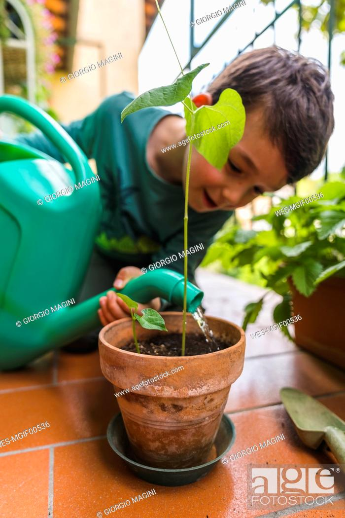 Stock Photo: Little boy watering potted plant on balcony.