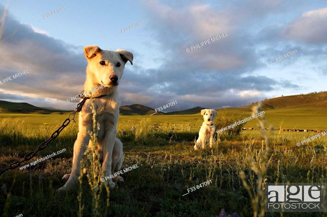 Stock Photo: Mongolia.