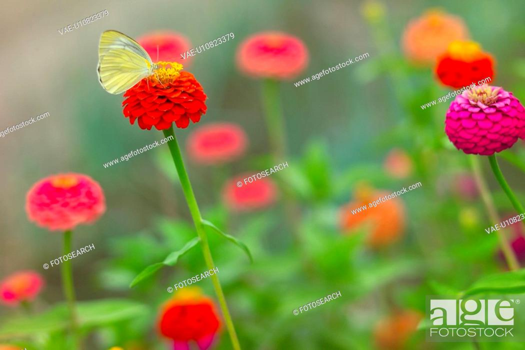 Stock Photo: Flower And A Butterfly.