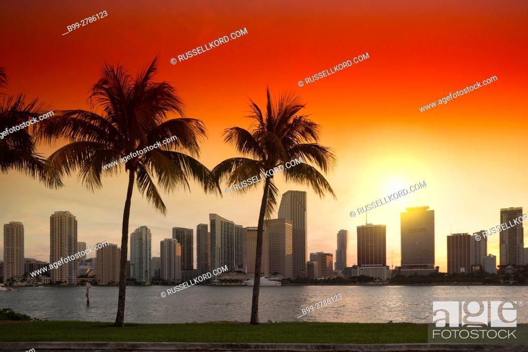 Stock Photo: PALM TREES WATSON ISLAND DOWNTOWN SKYLINE BISCAYNE BAY MIAMI FLORIDA USA.