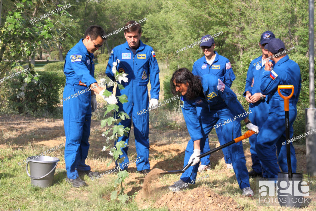 Stock Photo: Expedition 3233 Flight Engineer Sunita Williams of NASA plants a tree in her name behind the Cosmonaut Hotel crew quarters in Baikonur, Kazakhstan July 9.