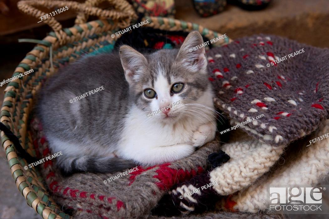 Stock Photo: Cat, Essaouira, Morocco.