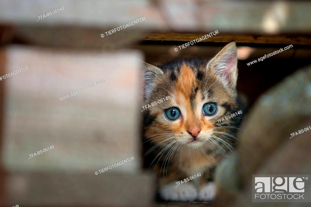 Stock Photo: young cat.