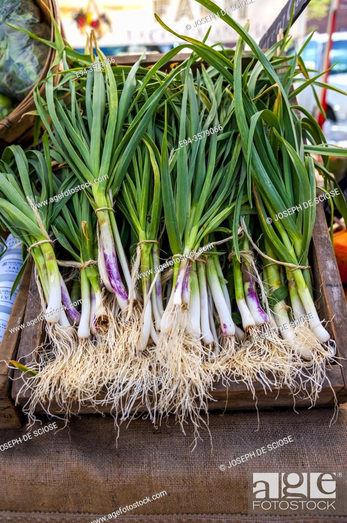 Stock Photo: A collection of green garlic for sale at a farmer's market in the spring.